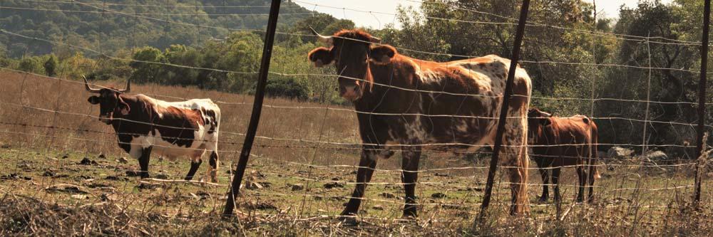 Malla anudada para ganado | Cerralba Cerramientos Albacete