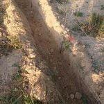 Cerramiento protección tortuga mora | Cerralba Albacete